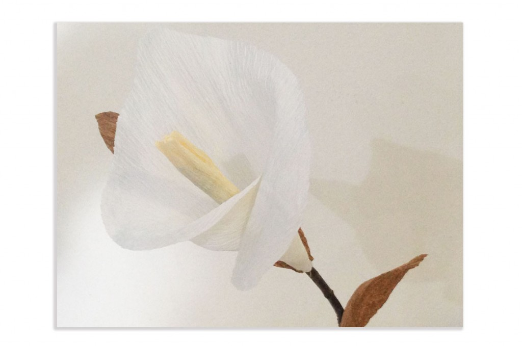 Calla in carta crespa
